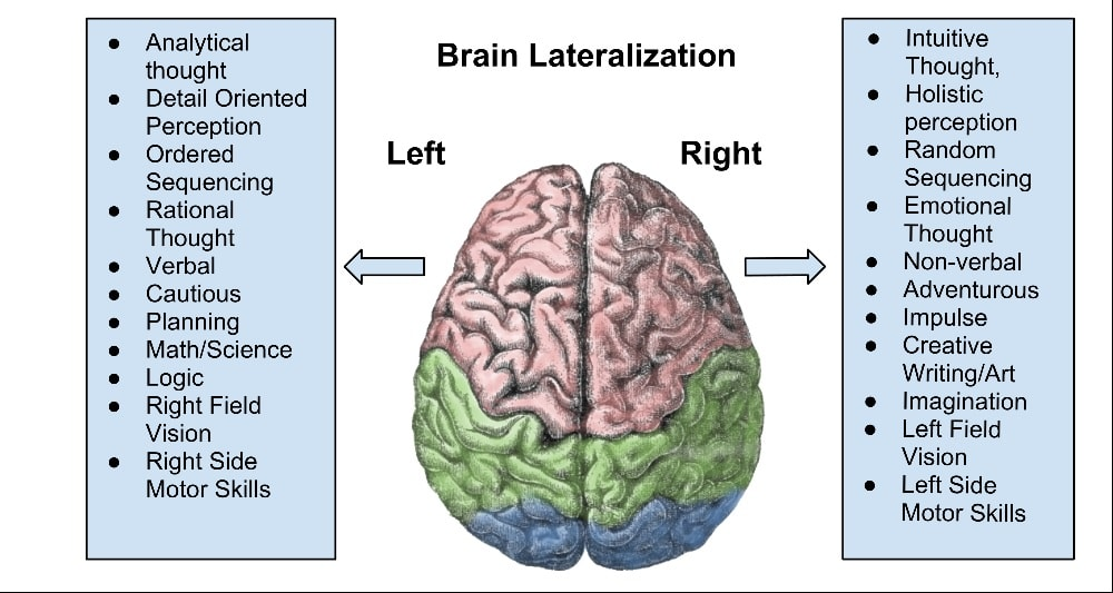 Illustration of brain lobes and function